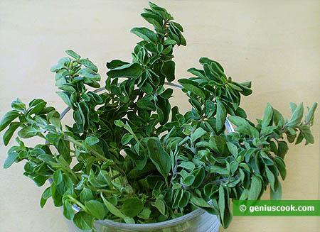 pianta Origano