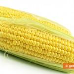 Молодая кукуруза