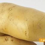 Наэлектризованная картошка полезна