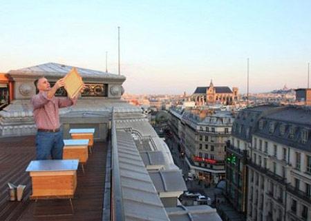 Louis Vuitton теперь производит и мёд