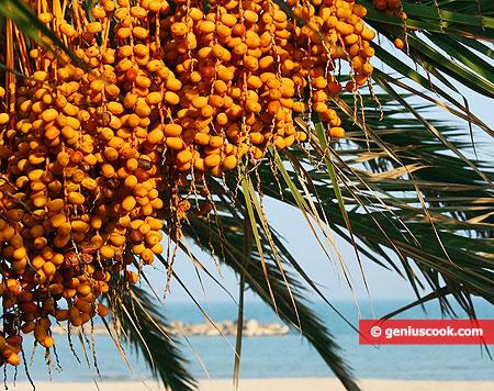 Пальма с финиками крупным планом