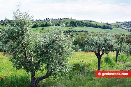 Типичный сельский итальянский пейзаж