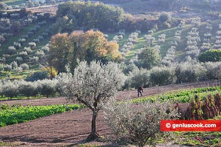 Типичный итальянский пейзаж