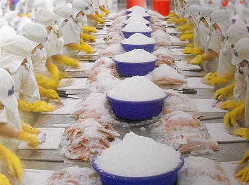 Производство пангасиуса, рыбы вредной для здоровья