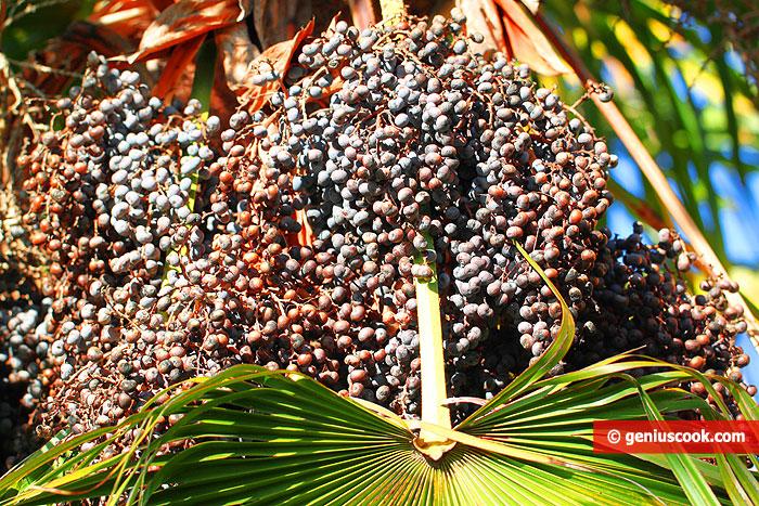 Пальмовое масло, это хорошо или плохо?